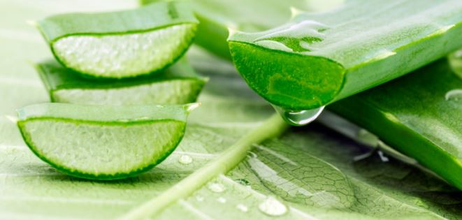 Aloe vera juice can help your itchy neck